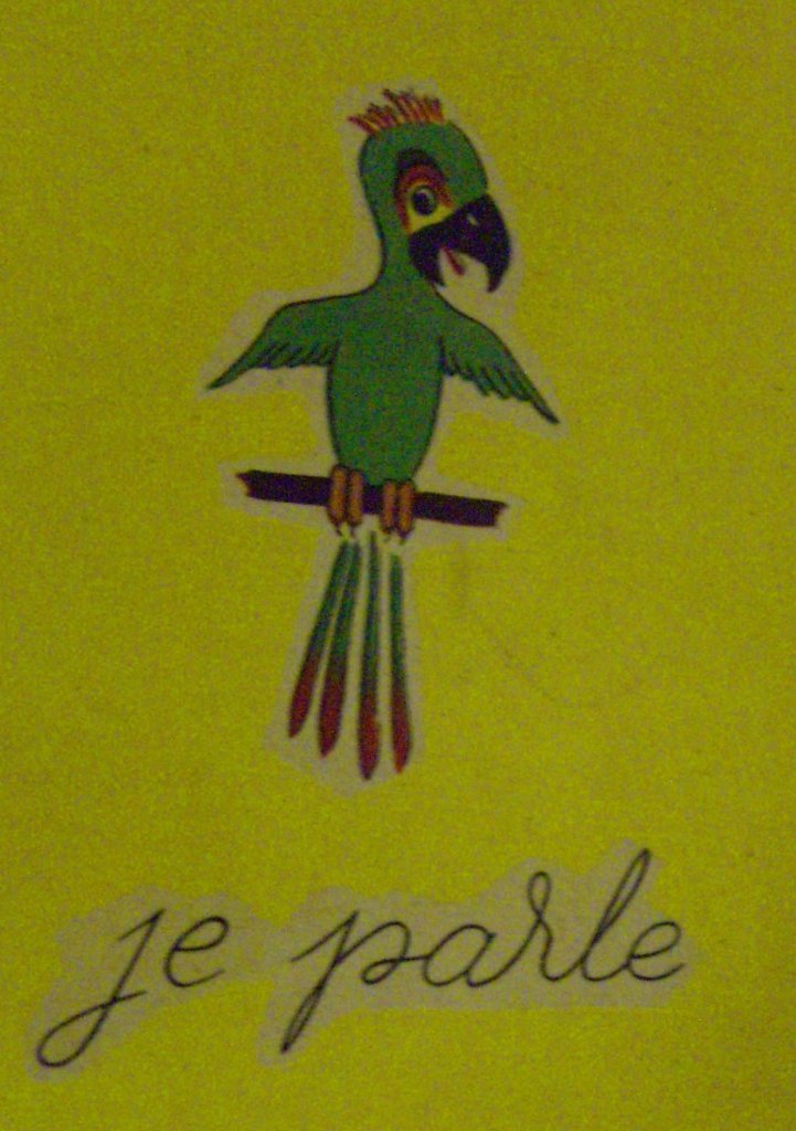 picture of parrot saying je parle, I talk