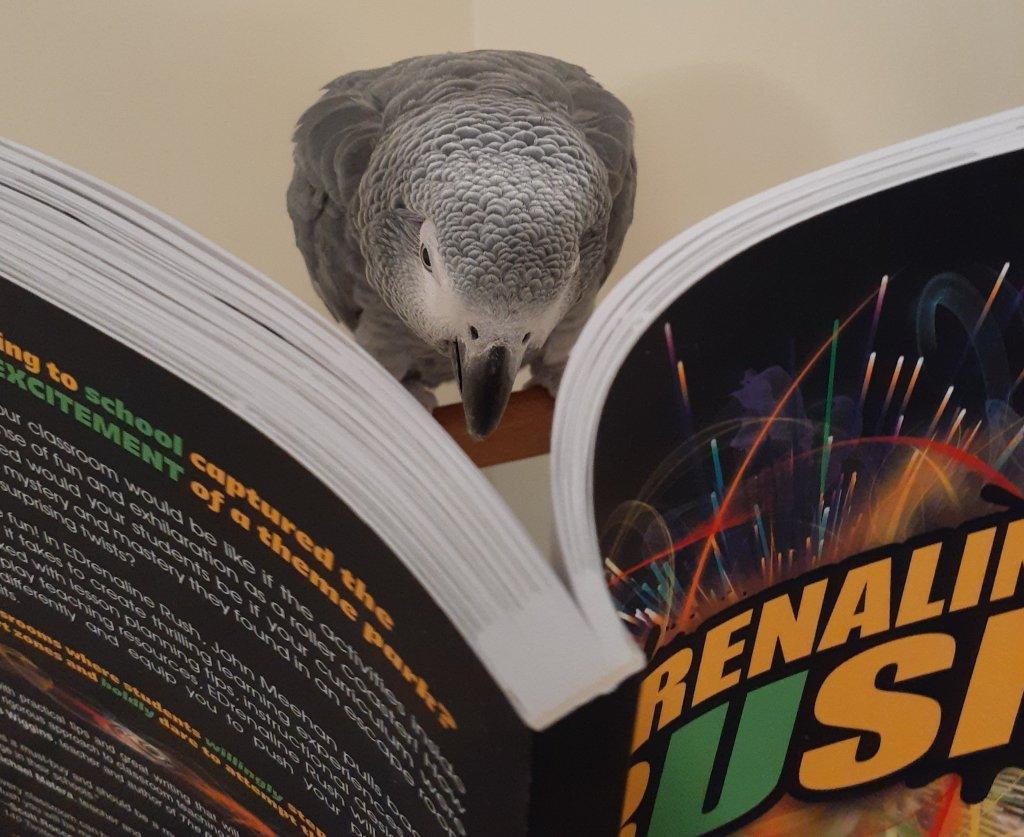 Photo of an African Grey parrot reading EDrenaline Rush
