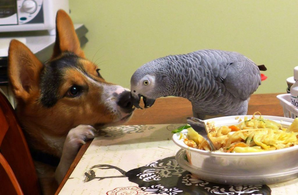 Dog and parrot nose to beak.