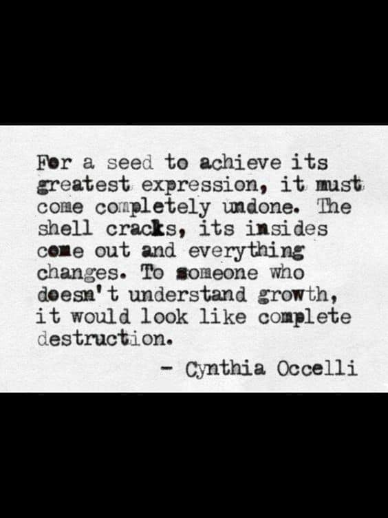 Quote by Cynthia Occelli