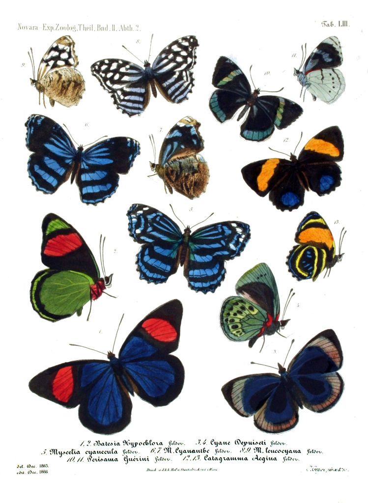 picture of monarch relatives