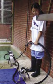Picture of girl hosing down penguin enclosure.